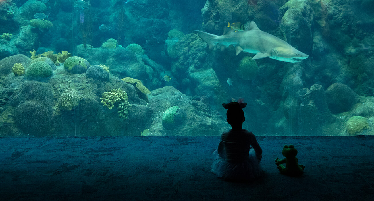 Little Girl Sits With Stuffed Animal At Large Tank
